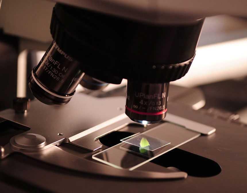 Strengthen Your Immune System Against Coronavirus