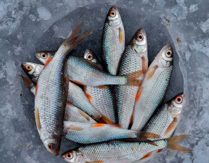 Seasonal Calendar To Pick The Good Fish